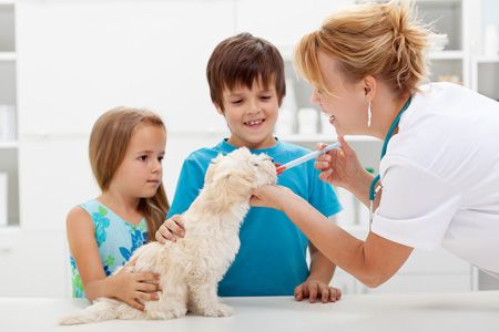 Medication For Your Pet